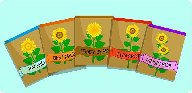 girassol anao de jardim:compre sementes de girassol você pode conseguir sementes de girassol